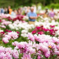 2022 Michigan Convention @ Matthaei Botanical Gardens and Nichols Arboretum